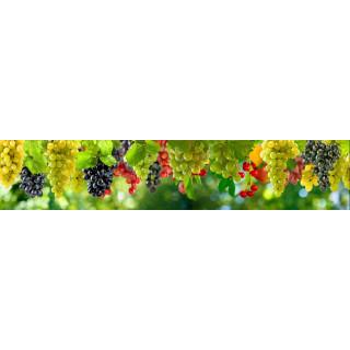 Фотопечать фрукты и овощи 13